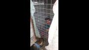 سگ شجاع دزد گرفت !