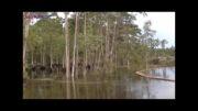 ناپدید شدن درختان