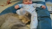 صبورترین گربه ی دنیا!!!!