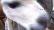 حیوانات خیلی بامزه اند وقتی غذا میخورند! (خیلی باحال)