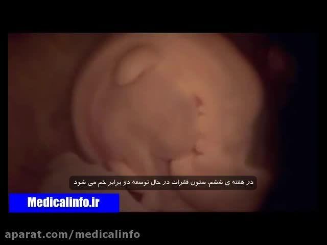 شرح کامل رشد جنین در بدن مادر
