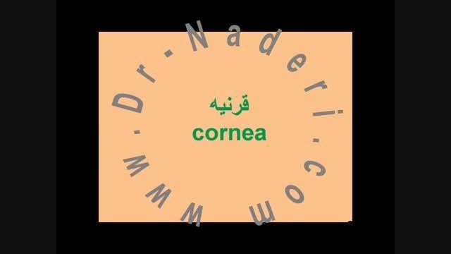 قرنیه -ساختمان چشم-مرکز چشم پزشکی دکتر علیرضا نادری