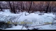 بیدار و شکار خرس از خواب زمستانی