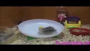 موش های بیکار