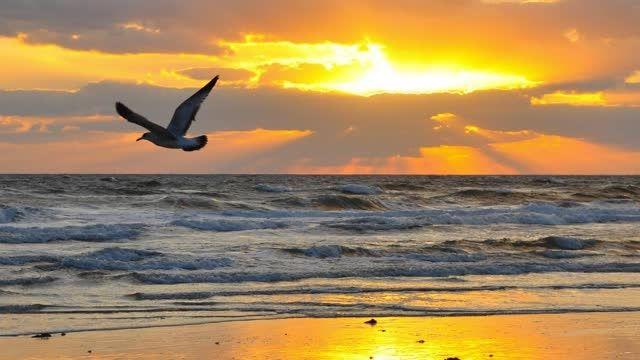 ساحل رویا (آرامش مطلق)