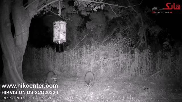 نمونه تصویر شب دوربین هایک ویژن مدل DS-2CD2032-I