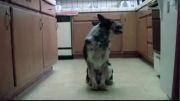 استعداد عجیب سگ