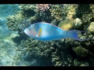 زیباترین ماهیهای سال 2013