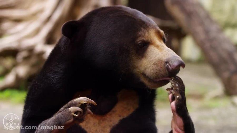 طبیعت و جانوران زیبا با کیفیت 4K
