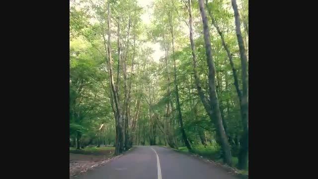 ایزدشهر - جاده جنگلی