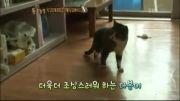 گربه ی ملوس کره ای!