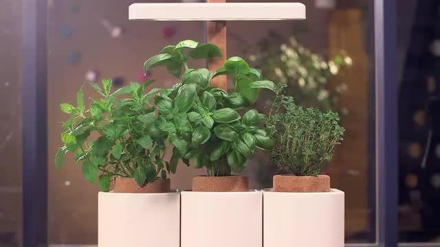 با گلدان لیلو (LILO)؛ سبزیجات تازه برداشت کنید