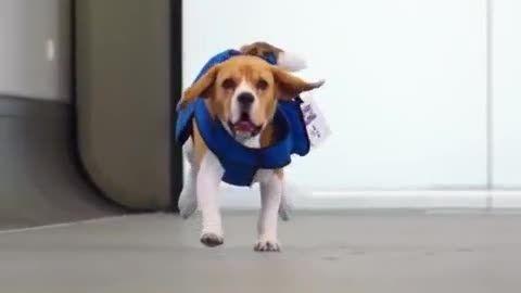 سگی که گمشده های شما را پیدا می کند