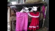 چهره دختران در حال پرو لباس