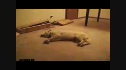 خواب دیدن سگ