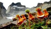 زیباترین و عجیب ترین گلهای دنیا