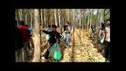 دارابکلا - پاکسازی جنگل افرایی پاکسازی قسمت سوّم