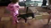 دعوا سگ و گربه بخاطر یه دختر