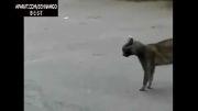 دعوای خیابانی گربه ها.اخر خنده