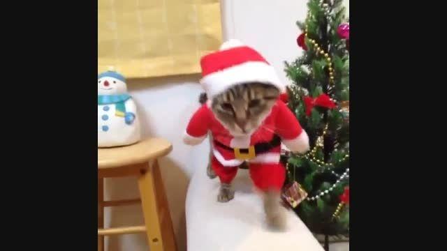 گربه ای که روی دو پایش راه می رود و لباس کریسمس دارد