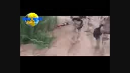 اعدام میدانی زخمیهای داعش..بیجی