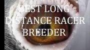 فیلم انواع چشمهای کبوتر مسافتی