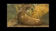 خشم شیر دریایی بعد از گرفتار شدن تصادفی در تور صیادان