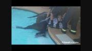 نجات اسب بازیگوش از استخر  توسط آتش نشانان