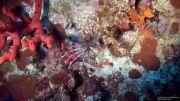 غواصی در دریای سرخ