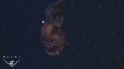 تصاویری از موجود آبزی عجیب و مور مور کننده قلابچه