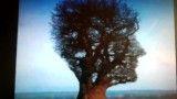 اگر میخواهید عجیب ترین درخت جهان و ببینید پس بفر مایید!