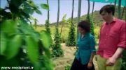 تولید فلفل سیاه در کامبوج