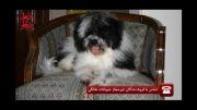 مستند خط رو خط - رواج پدیده نگهداری از حیوانات خانگی(2)