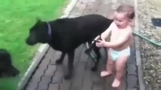بازی بچه و سگها