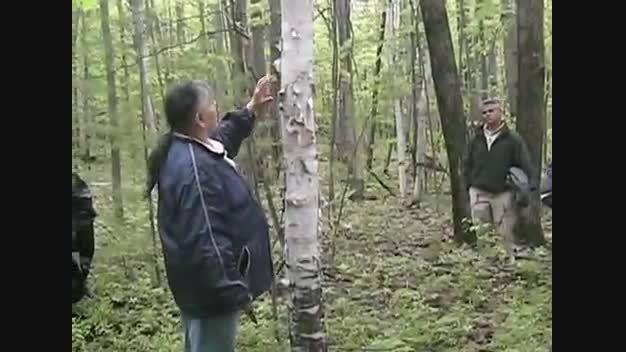 دیدگاه بومی و سنتی در جنگل