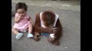 میمون خودخواه