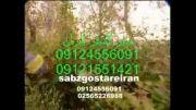 شمشاد  زن موتوری  08645226988 جاده تهران ساوه