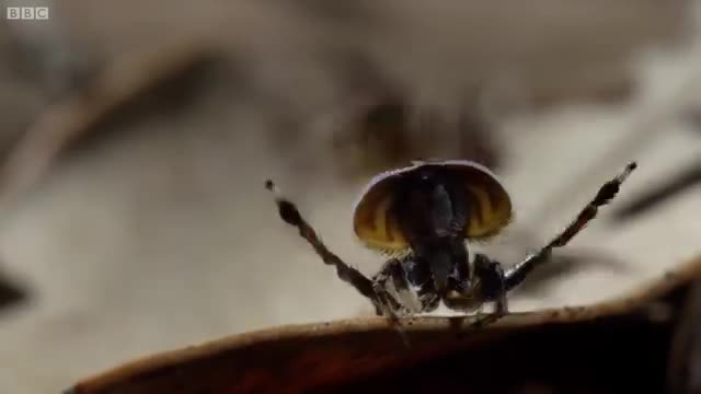 رقص باورنکردنی عنکبوت نر برای فرار از عنکبوت ماده-دیدنی