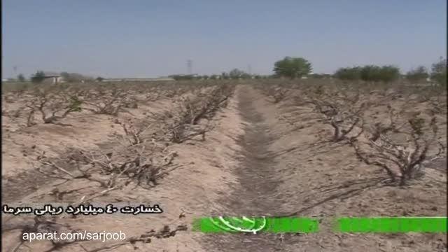 خسارت 40 میلیارد ریالی سرما به باغ های انگور در برخوار