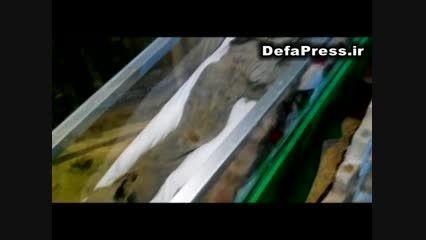 نخستین فیلم منتشر شده از تفحص 175 شهید غواص