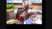 نحوه شستشوی حیوانات : کاسکو