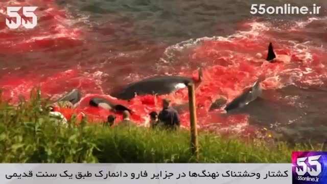 کشتار وحشتناک نهنگ ها در جزایر فارو دانمارک
