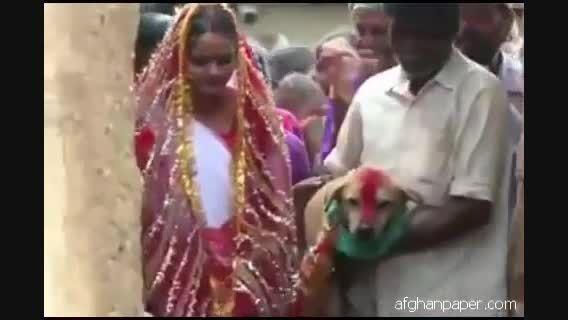 ازدواج دختر هندی با سگ !