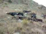 مرگ بر پژاک، شهادت نیروهای سپاهی توسط مزدوران پژاک- خیلی دردآوره
