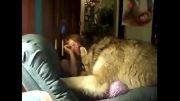 صدای گرگ از دختر یا گرگ؟