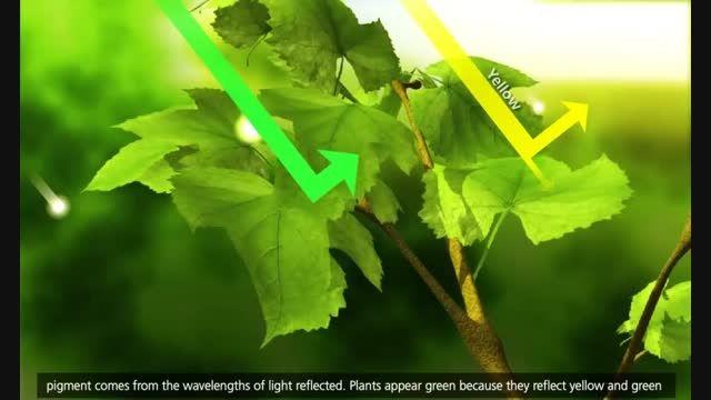 فتوسنتز در گیاهان(انیمیشن 3بعدی)