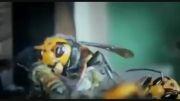 جنگ واقعی میان 30 زنبور غول پیکر