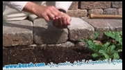 باغبانی با دانه - راهنمای باغبانی