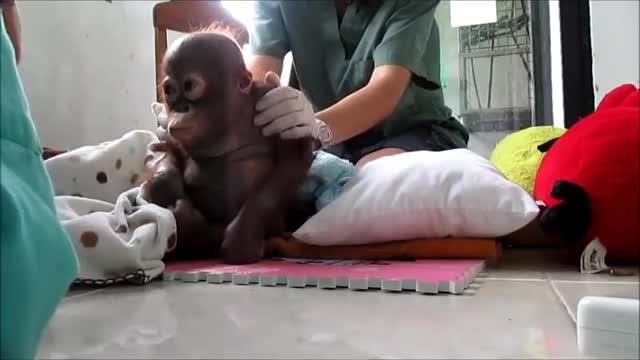 گریه نوزاد گوریلی !!