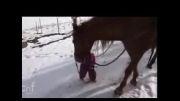 دوستی شگفت انگیز دختر بچه با اسب!!!